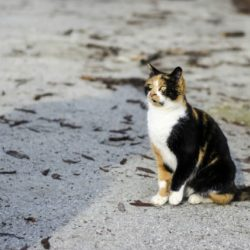 Tips on How to Find A Lost Cat